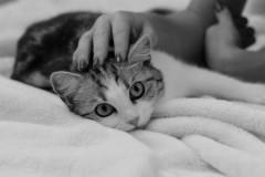 acariciando gatito