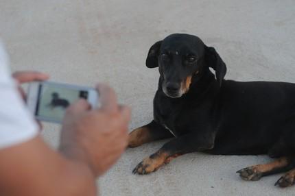 fotografiar la mascota
