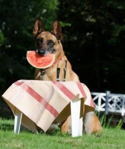 perro con sandia