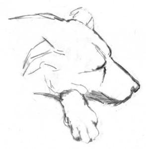 perro dibujo