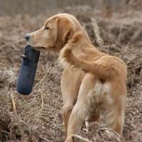 ¿los perros confían más en su olfato o en su memoria?