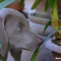 Las 21 plantas comunes más tóxicas para nuestras mascotas