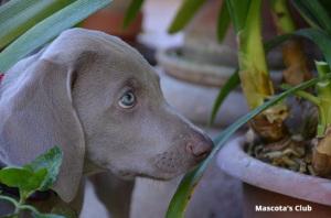 mascota y plantas toxicas