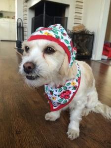 Disfrazar al perro
