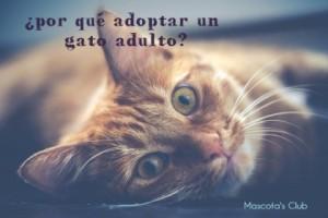 Adoptar un gato adulto