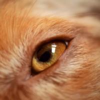 Células madre, presente y futuro para las mascotas