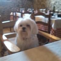 6 lugares dónde comer junto a nuestro perro