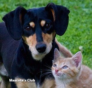 perro y gato1