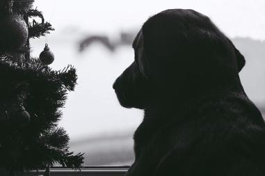 esperando su regalo