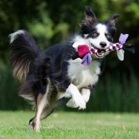 ¿juegas a tirarle el palito a tu perro?