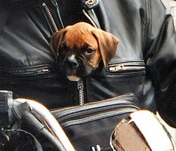 viajar con mascota por europa