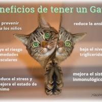 Un gato, como aporte de salud en casa