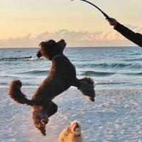 Turismo Dogfriendly en Murcia, La Costa Cálida
