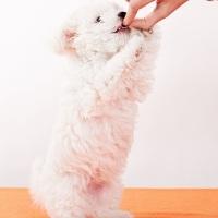 Delicias Veganas para Caninos