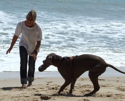 playa Barcelona dogfriendly