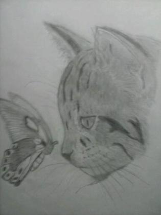 Gato Curioso por Victor Finestres