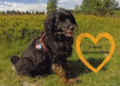Amsterdam dogfriendly