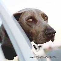 5 Hoteles Dogfriendly en Barcelona que admiten perros Grandes
