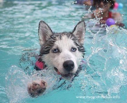 perro aprende a nadar