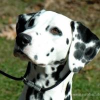 A Cáceres,  Patrimonio de la Humanidad   con nuestro perro