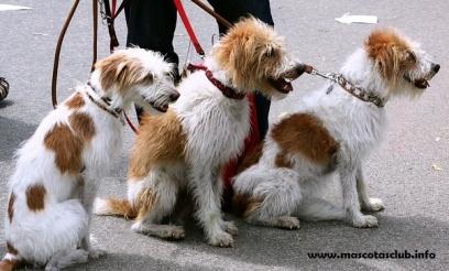 correa-ext-perro
