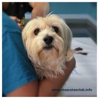 Salud para nuestro Perro y Ahorro Familiar