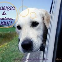 Con nuestro Perro en Galicia