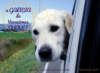 a galicia con nuestro perro2