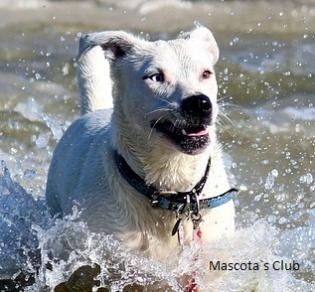donde bañarse con perro