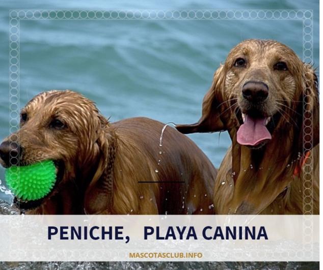 Peniche playa canina