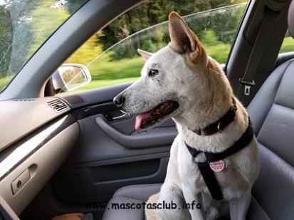 dog-2379878_640 (1)