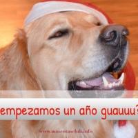 Fin de Año con Nuestro Perro