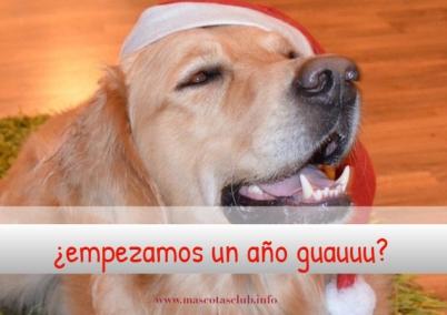 con perro fin de año