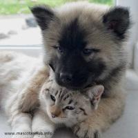 ¿Necesitas Esterilizar o Castrar a tu Perro o Gato?