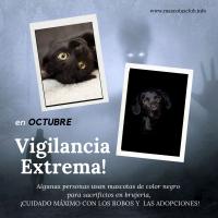 Octubre, el mes más peligroso para mascotas negras